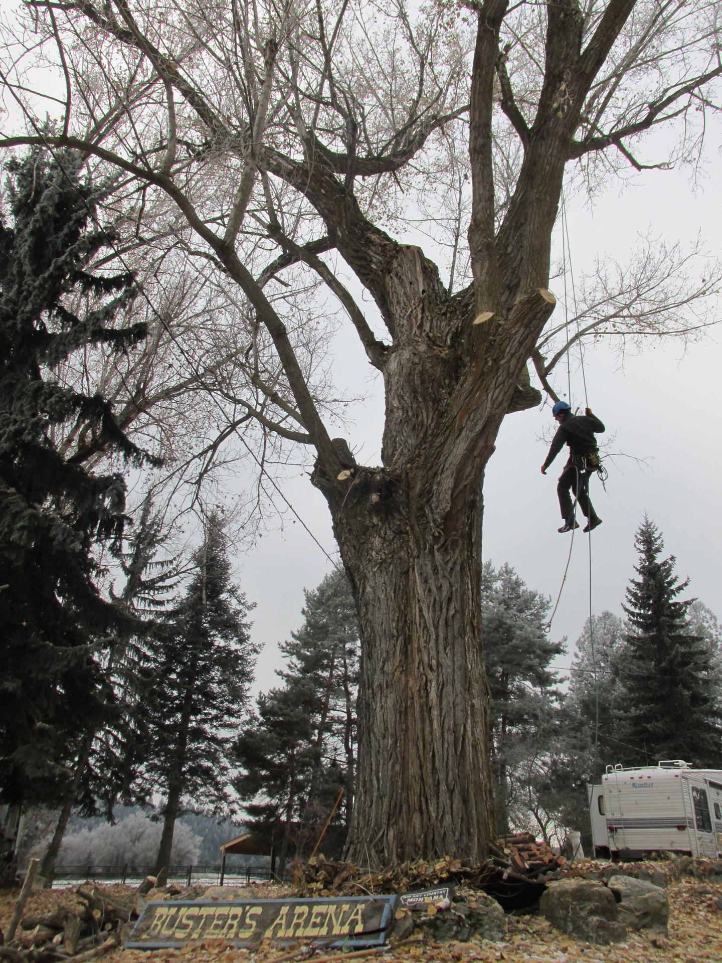 pruning trees in northwest montana