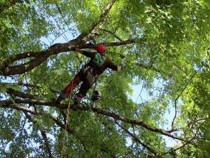 montana-tree-care