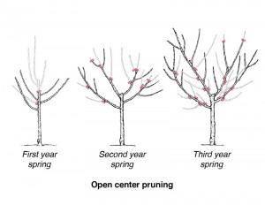 pruning-open-ctr-wisc